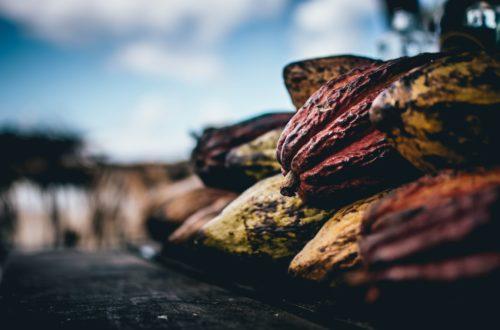 Article : Coopératives de cacao : quelles solutions apporter aux petits paysans ?